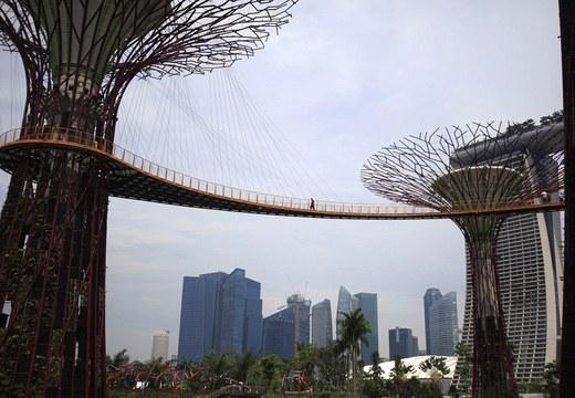 Gigantic Super-trees That