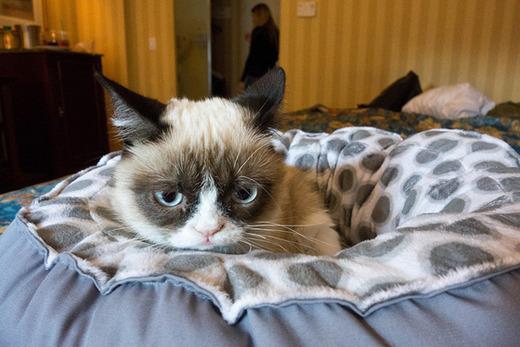 Tardar Sauce AKA Grumpy Cat Goes To Hollywood! Kids News ... Tardar Sauce