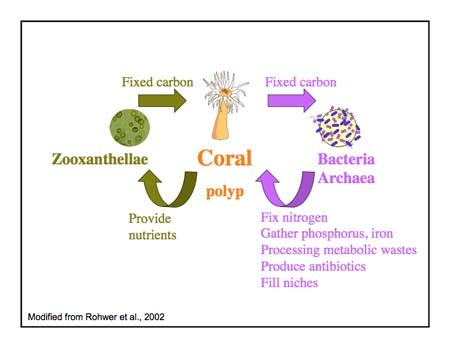zooxanthellae and coral mutualistic relationship example