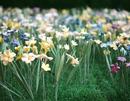 Thumb_flowere48a66a3bc3578ebd413a155d74c