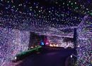 Australian Family Sets New Record For Christmas Light Display