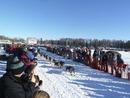 Alaska's Iditarod Gets Off To A Rocky Start - Literally!